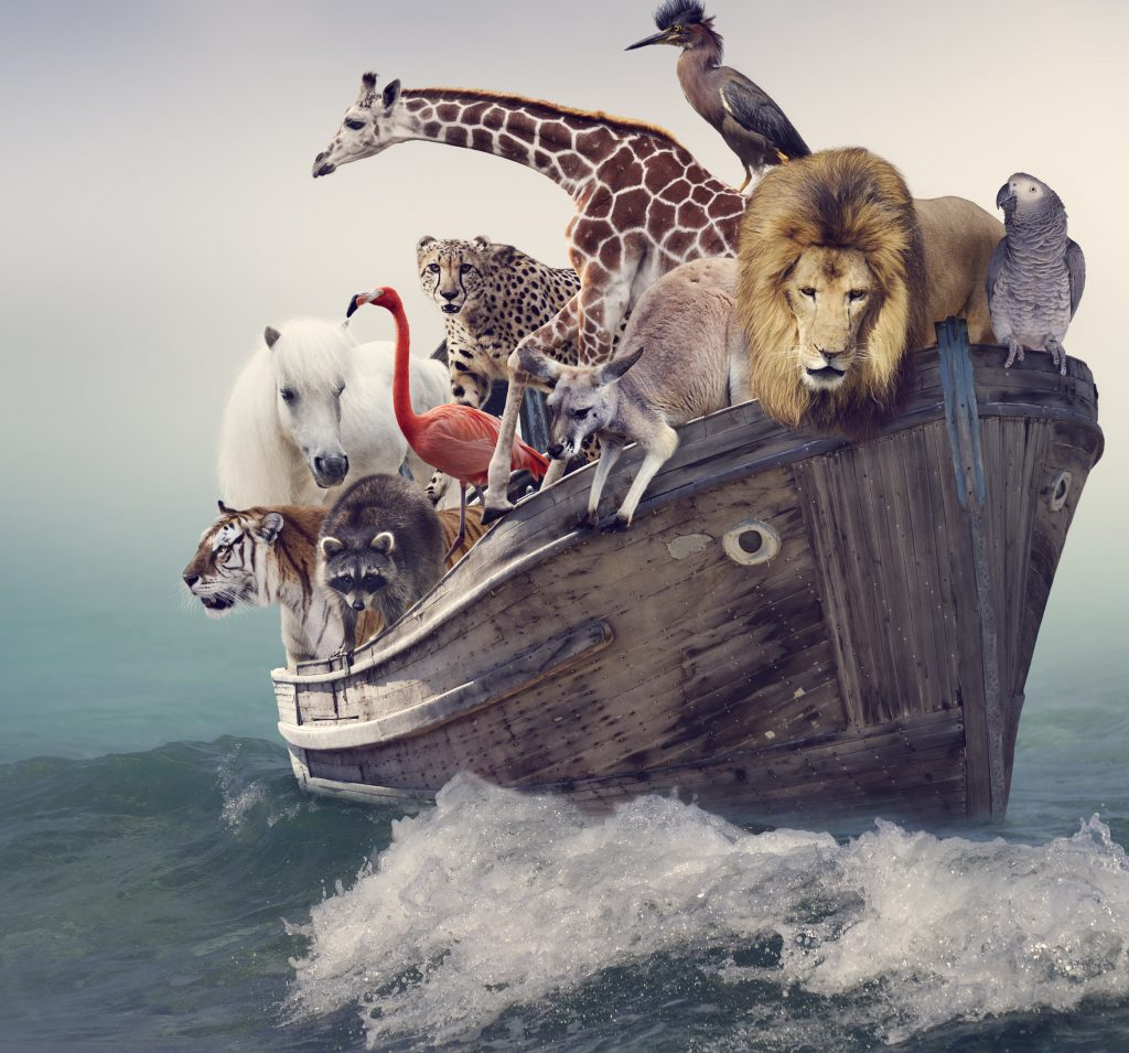 Animals in a boat.
